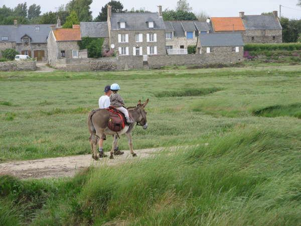 Randonnée à la plage avec un âne sellé en passant dans les voies vertes et dans le havre de Portbail