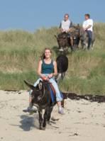Promenade à la plage avec les ânes sellés